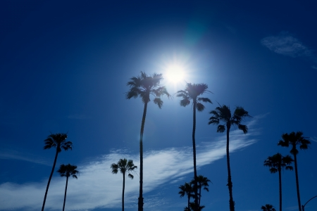 newport: Palm trees in southern California Newport area with sun glowing Stock Photo
