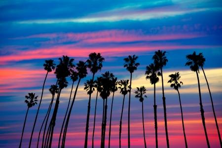 カリフォルニア州のヤシの木グループ カラフルな空と夕焼け