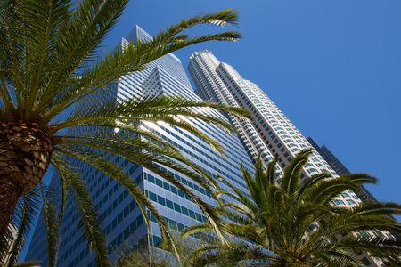 high rise: Downtown LA Los Angeles skyline California with palm trees