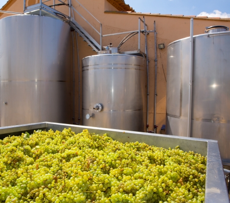winemaking: chardonnay winemaking with grapes and Fermentation stainless steel tanks vessels