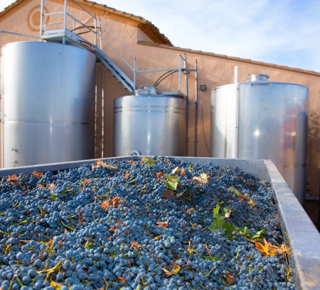winemaking: cabernet sauvignon winemaking with grapes and Fermentation stainless steel tanks vessels Stock Photo