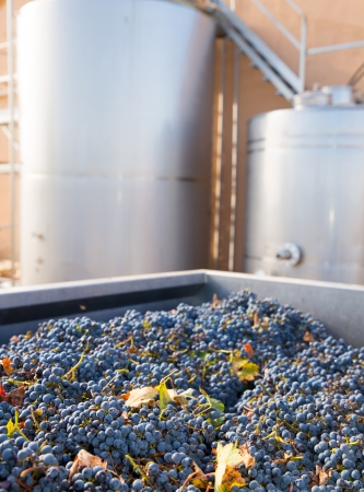 cabernet: cabernet sauvignon vinemaking with grapes and Fermentation stainless steel tanks vessels