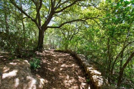 mediterranean forest: mediterranean forest in Menorca with oak trees in Cala Galdana of Balearic islands Stock Photo