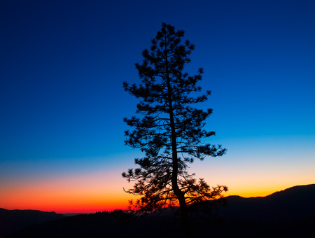sequoia: Sunset in Yosemite National Park with tree silhouettes at California USA Stock Photo