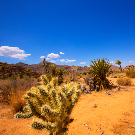mohave: Joshua Tree National Park Yucca Valley in Mohave desert California USA Stock Photo