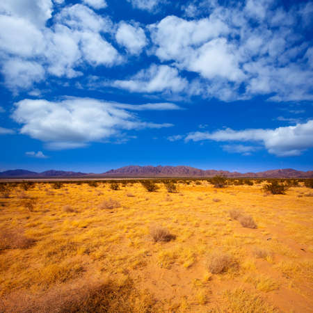 mohave: Mohave desert in California Yucca Valley USA Stock Photo