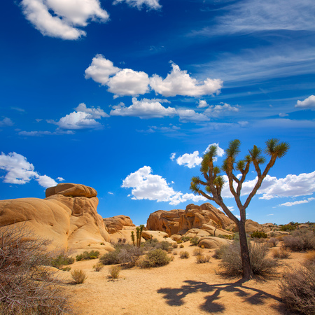mohave: Joshua Tree National Park Jumbo Rocks in Yucca valley Mohave Desert California USA Stock Photo