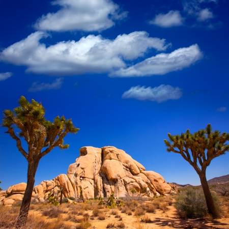 Joshua Tree National Park Yucca Valley in Mohave desert California USA Фото со стока