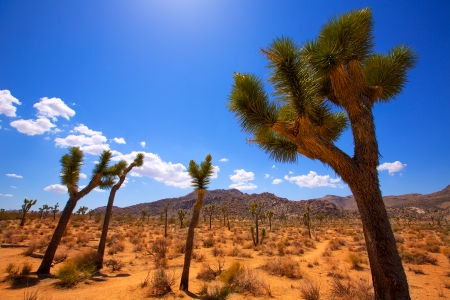 Joshua Tree National Park Yucca Valley in Mohave desert California USA photo