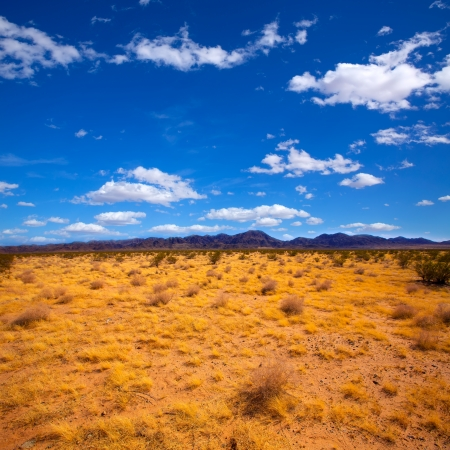 Mohave desert in California Yucca Valley USA photo