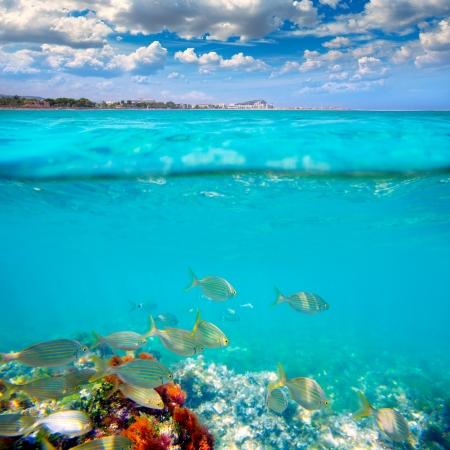 plancton: Denia Alicante Marineta Casiana submarina playa con la escuela de peces salema