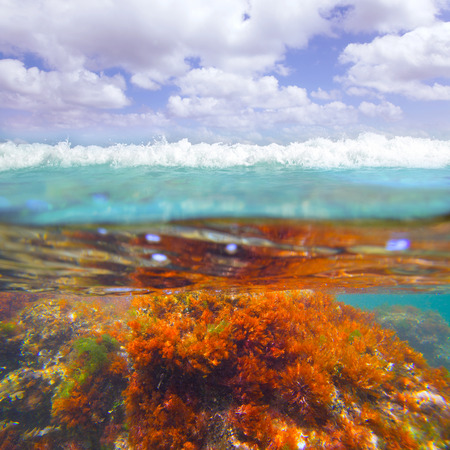Mediterranean underwater seaweed algae in Denia Javea Alicante spain photo