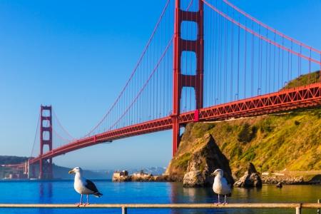 san francisco golden gate bridge: San Francisco Golden Gate Bridge seagull California USA