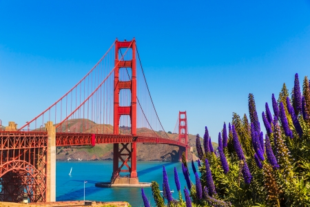 Golden Gate Bridge San Francisco purple flowers Echium candicans in California Stock Photo - 25146738