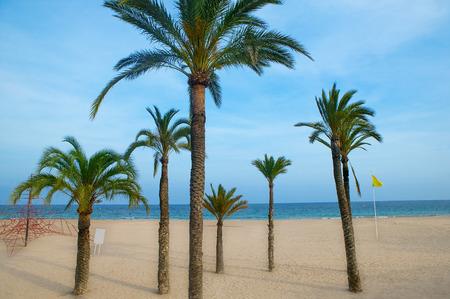 Benidorm palm trees beach in mediterranean alicante from spain photo