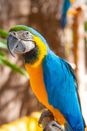 Blue Parrot portrait with yellow neck in the park photo