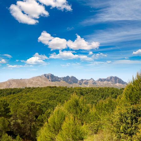 mediterranean forest: Calpe Alicante sierra de Bernia y Ferrer mountains and Mediterranean pine forest Spain