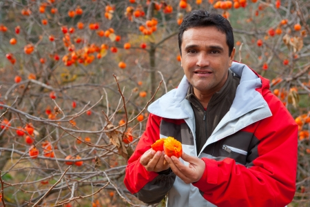 Latin farmer in autumn happy with persimmon fruits Spain photo