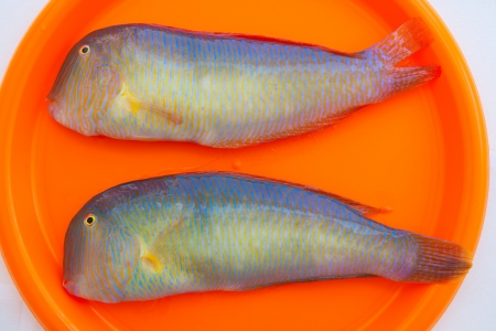 Fish Xyrichthys novacula also called Raor pearly razorfish or cleaver wrasse photo