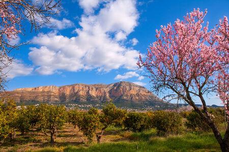 mongo: Mongo in Denia Javea in spring with almond tree flowers Alicante Spain Stock Photo