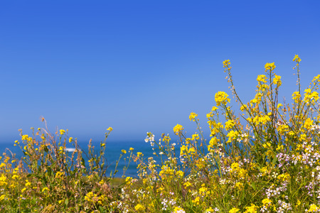 California Pigeon point spring flowers in Cabrillo Hwy coastal highway State Route 1 photo