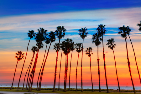 California zonsondergang Palmboom rijen in Santa Barbara VS