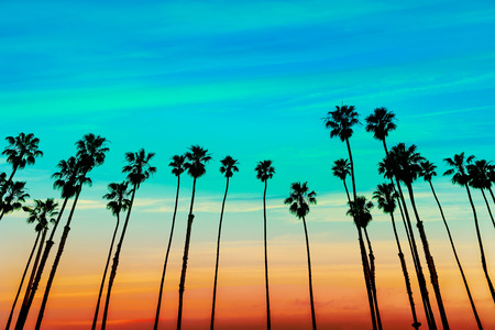 california state: California sunset Palm tree rows in Santa Barbara US