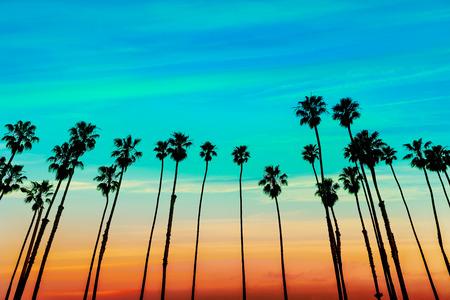 Hileras de árboles de palma en la puesta del sol de California Santa Barbara EE.UU. Foto de archivo