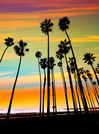 ocean sunset: California sunset Palm tree rows in Santa Barbara US