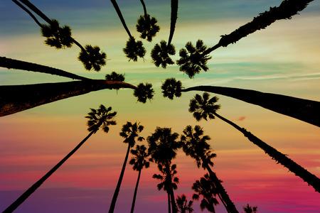 santa barbara: California Palm trees view from below in Santa Barbara US Stock Photo
