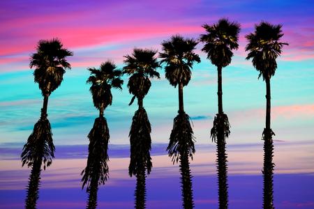 california coast: california sunset palm trees washingtonia western surf flavour in US Stock Photo