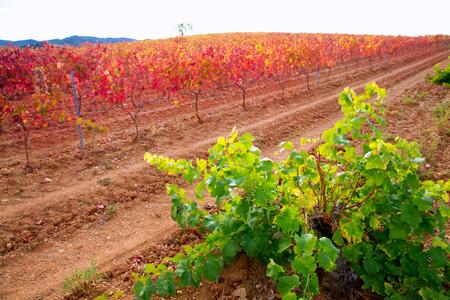 zaragoza: Carinena and Paniza vineyards in autumn yellow red Zaragoza Spain