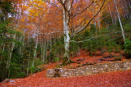 ordesa: Autumn fall forest in Pyrenees Valle de Ordesa Huesca Spain Stock Photo