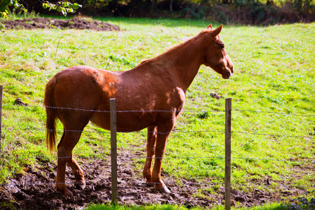 Brown horse near fence in Navarra meadow near Pyrenees of Spain photo