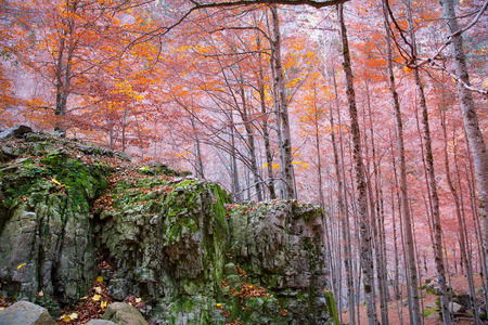 ordesa: Autumn beech fall forest in Pyrenees Valle de Ordesa Huesca Spain