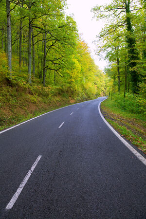 Pyrenees curve road in forest of Spain photo