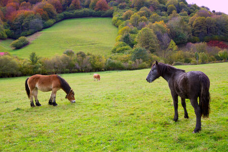Horses and cows grazing in Pyrenees green autumn meadows at Spain photo