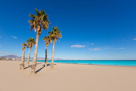 san juan: Alicante San Juan beach with palms trees of Mediterranean sea at Spain valencian Community