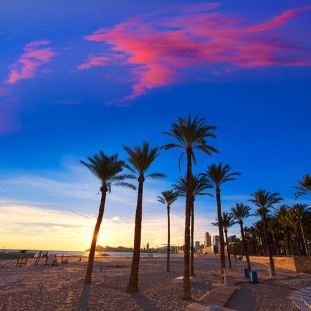 costa blanca: Benidorm Alicante playa de Poniente beach sunset in Spain with palm trees