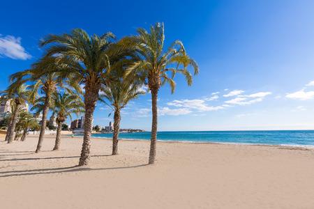 alicante: Alicante San Juan beach of La Albufereta with palms trees in Mediterranean Spain