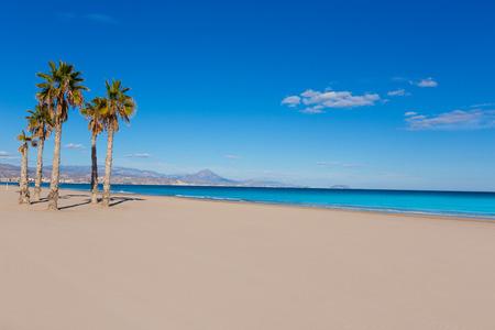 alicante: Alicante San Juan beach with palms trees of Mediterranean sea at Spain valencian Community