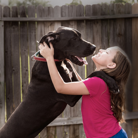 great dane stand up on kid girl shoulders playing together photo