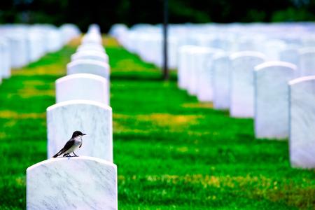 Nationalfriedhof Arlington Virginia VA in der Nähe von Washington DC USA Standard-Bild - 36939777