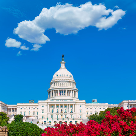 federal: Capitol building Washington DC pink flowers garden USA congress US Stock Photo