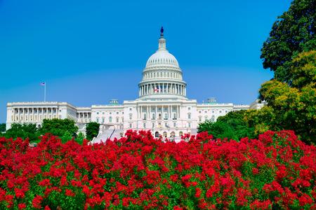 capital building: Capitol building Washington DC pink flowers garden USA congress US Stock Photo