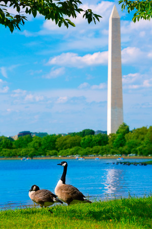 district of colombia: Washington Monument and Tidal Basin ducks District of Columbia USA Editoriali