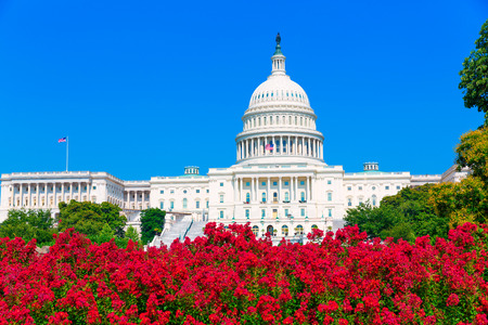 us government: Capitol building Washington DC pink flowers garden USA congress US Stock Photo
