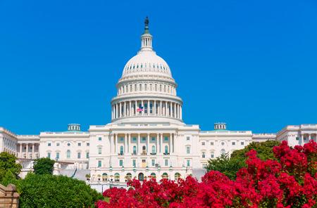 Edificio del Capitolio de Washington DC flores rosadas jardín EE.UU. Congreso de EE.UU. Foto de archivo