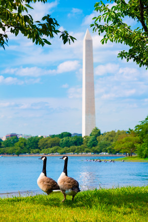 district of columbia: Washington Monument and Tidal Basin ducks District of Columbia USA Editorial