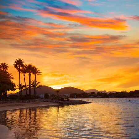 palmier: Alcudia Majorque au coucher du soleil sur la plage des �les Bal�ares Majorque Banque d'images
